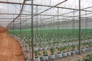 pos-jedip-pertanian