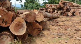 Dakwaan palsu PAN: Jabatan Hutan lapor polis